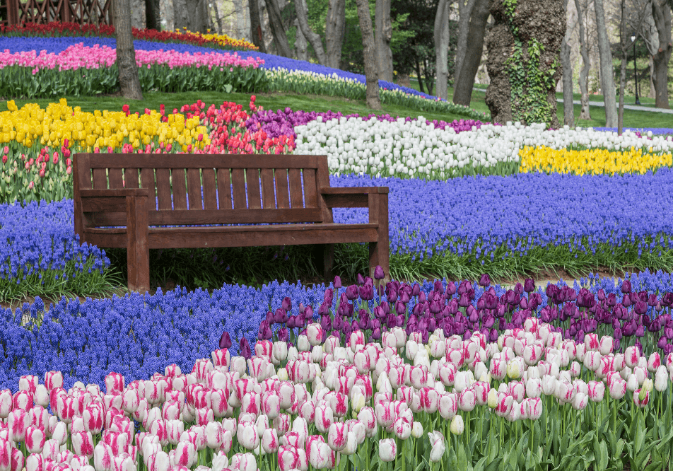 Wander Blog - Gorgeous gardens in and across the San Francisco Bay Area!
